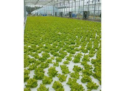 点击查看乐虎国际官方app下载<br>标题:水培种植  阅读次数:865