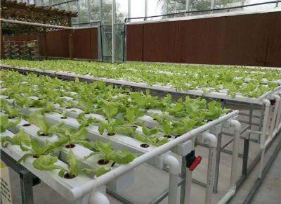 点击查看乐虎国际官方app下载<br>标题:水培种植 阅读次数:951